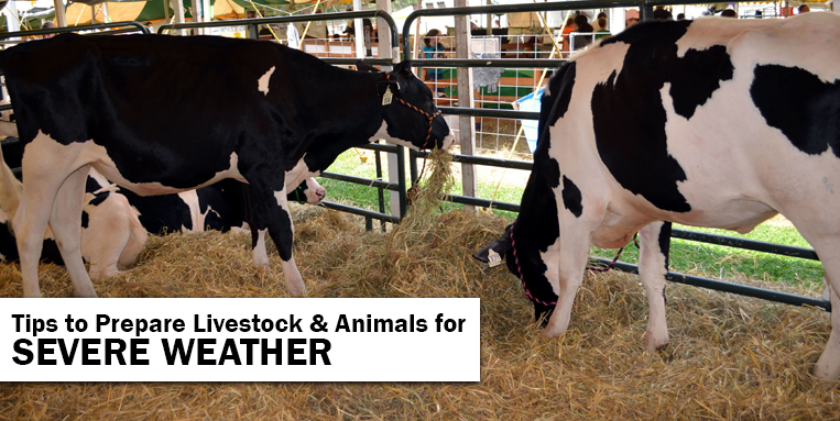 Tips to Prepare Livestock & Animals for Severe Weather