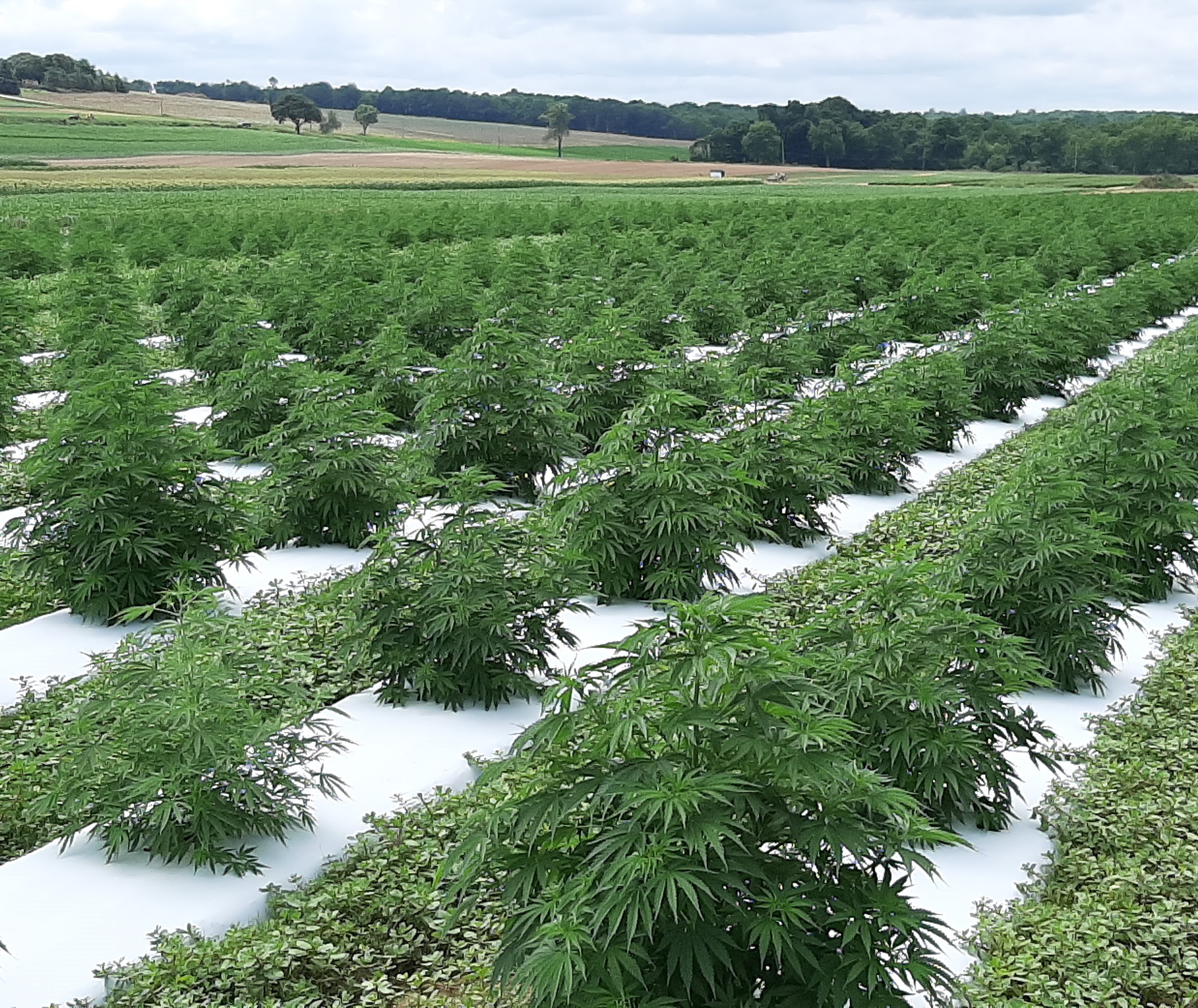 Department Of Agriculture New Jersey Hemp Program