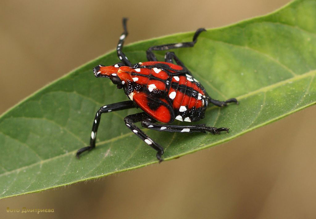 Department of Agriculture | Spotted Lanternfly