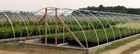Photo of Hoop House  - Click to enlarge