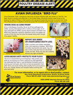 Photo of Poultry Disease Alert