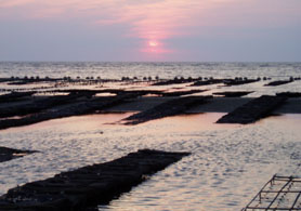 Photo of New Jersey clam beds - Click to enlarge