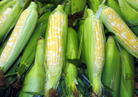 Photo of Jersey Fresh corn - Click to enlarge