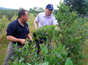 Photo of Assemblyman Albano and Secretary Fisher picking blueberries