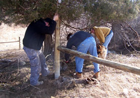 Photo of Fencing being installed at Howling Wolf Farm in Hope - Click to enlarge