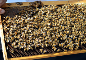 Photo of Hyatt bee frame - Click to enlarge