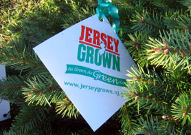 Photo of Jersey Grown tag on a Christmas tree - Click to enlarge