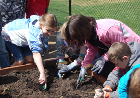 Photo of students planting strawberries - Click to enlarge