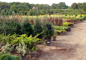 Photo of horticulture crop - Click to enlarge