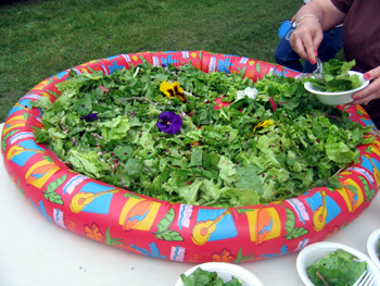 Photo of the home grown salad - Click to enlarge