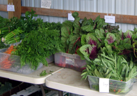 Photo of organic produce - Click to enlarge