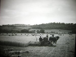 Archival NJ agricultural photo - Click to enlarge