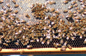 Photo of a beehive