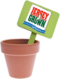 Graphic: Flower pot with sign sticking out that reads - Jersey Grown