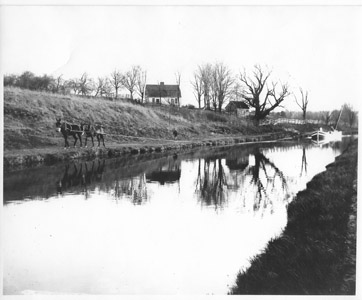 This photo shows a pair of mules pulling a canal boat on the Feeder Canal during the first decade of the 20th century.  The Johnson Ferry House, now located on the grounds of Washington Crossing State Park, can be seen in the background.  Notice the length of the towline, which was more than 100 feet in length, so that the mules walked far ahead of the boat.  Usually, the mule driver walked with the team to keep them moving and respond to any problems.