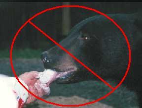 Do not feed bears!