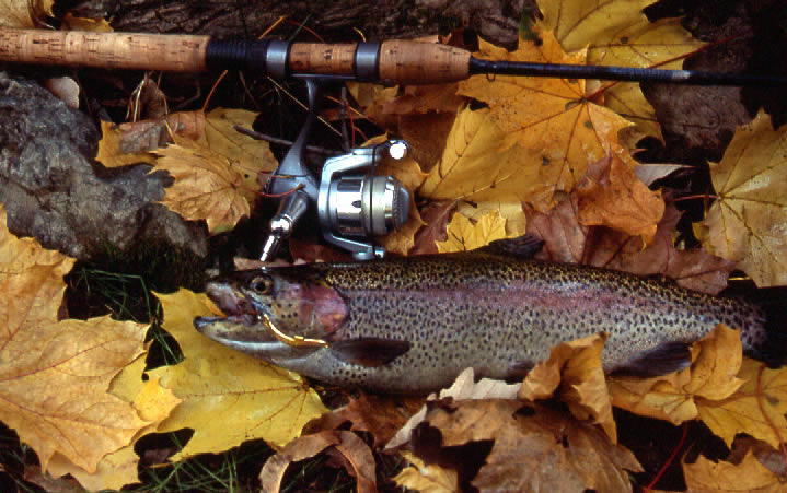 how to fish a chatterbait in fall