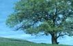 picture of tree