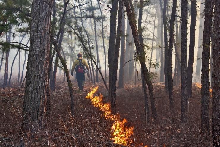 Forest Fire Service Prescribed Burn