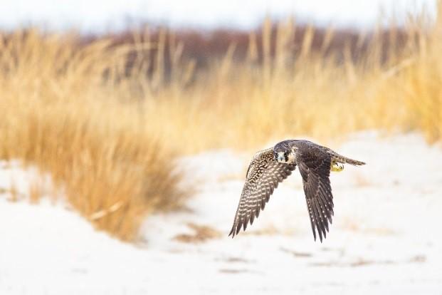 State Wildlife Action Plan