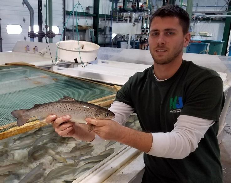 Hackettstown Fish Hatchery worker Nick Ruberto with salmon
