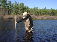 Water levels are measured in shallow observation wells installed in coastal -plain ponds