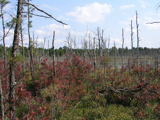 Lands preserved in the Toms River Corridor through the Pinelands Conservation Fund