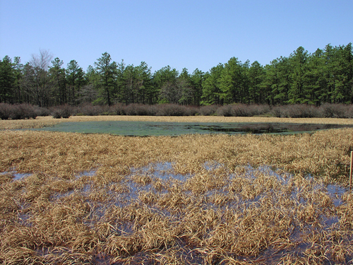 natural Pinelands pond